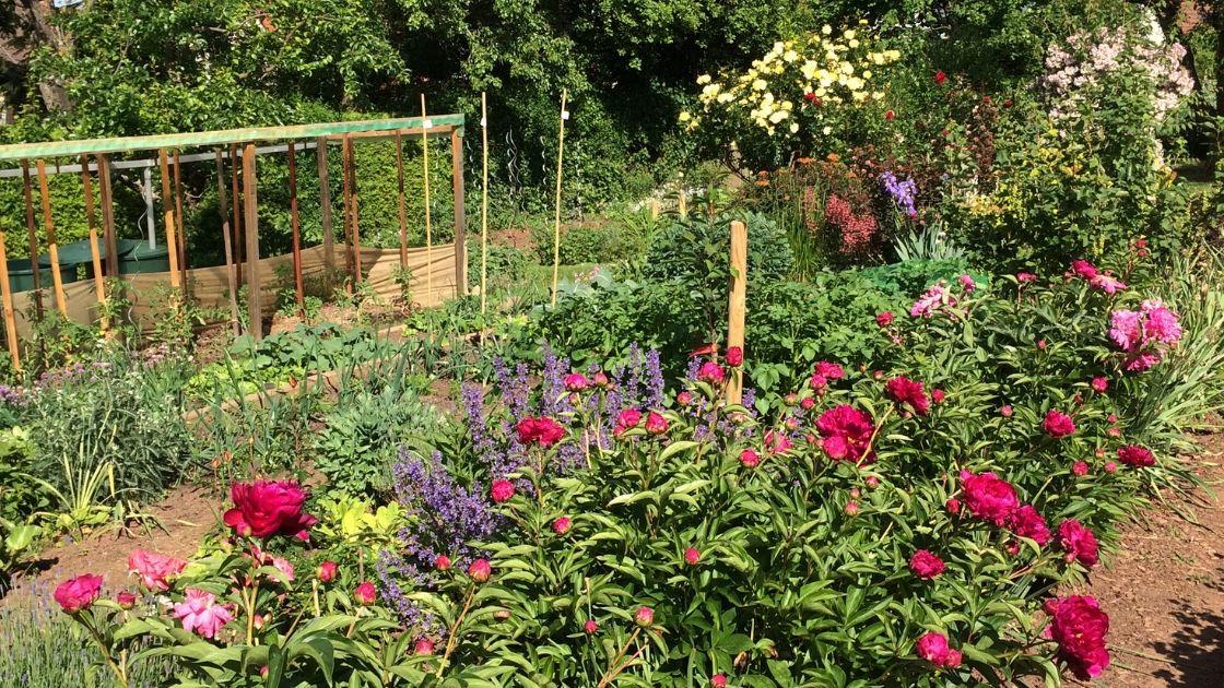 Nachhaltiges Familien Leben - Bio Garten